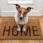 Coming-Home-With-New Dog