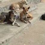 Homeless-Dogs
