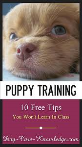 Puppy-Training-Tips