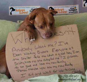 Adopt-This-Dog