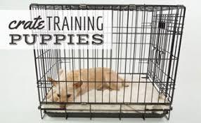 Crate-Training