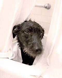 Rosie-in-bathtub