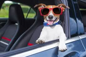 Dog-with-head-out-window-wearing sunglasses