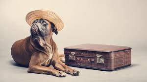 Dog-Ready-to-Travel
