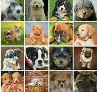 Gallery-of-dogs