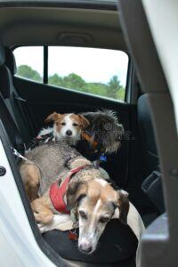 Dog's-in-hammock