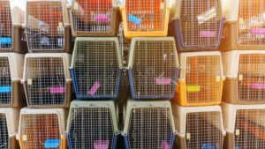 Dog-Crates