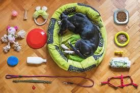 Canine-essential-accessories