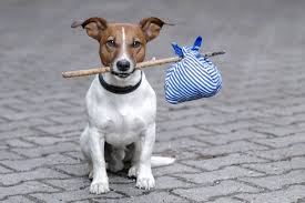 dog-with-stick-blue-pouch