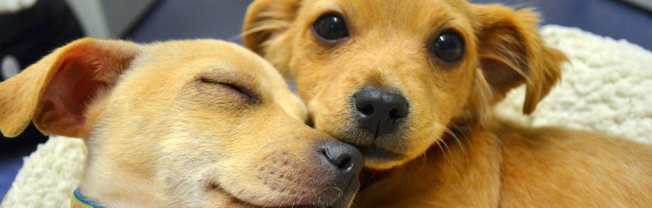 Rescue-pups