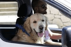 dog-in-car-with-man
