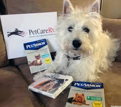 dog-with-prescriptions