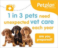 pet-plan-insurance-banner