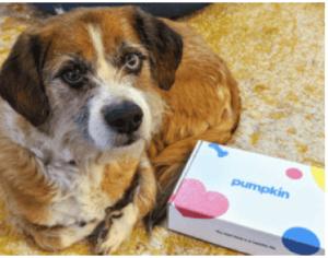 dog-with-pumpkin-box