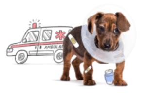 injured-dog