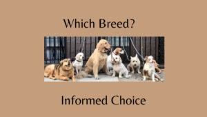 which-breed-is-right