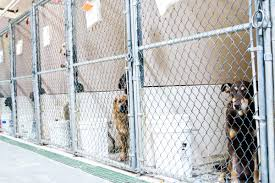 animal-shelter-kennels