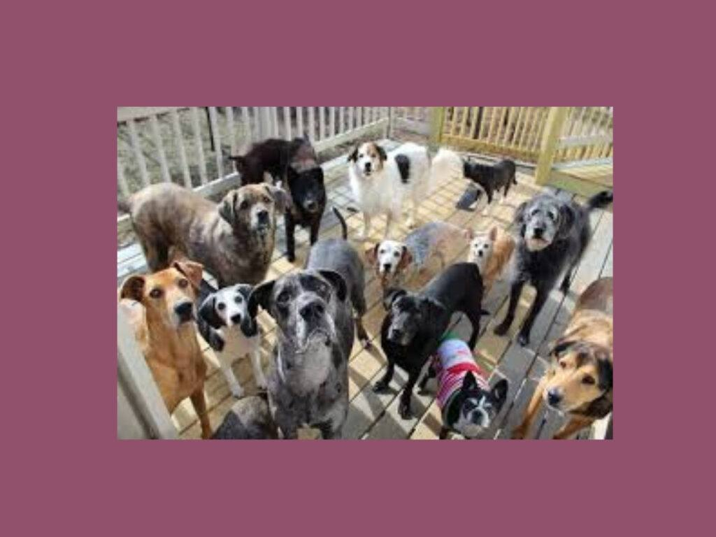 multiple-dogs-on-deck