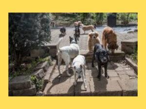dogs-in-yard