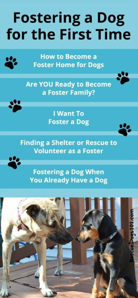 fostering-a-dog