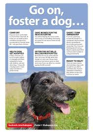 go-on-foster-a-dog