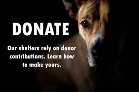 donate-to-shelters