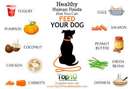 healthy-human-foods-for-dogs