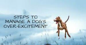 steps-to-manage-a-dogs-over-excitement
