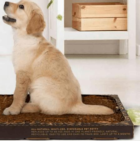 bark-potty-tan-dog