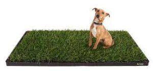 dog-sitting-on-doggielawn