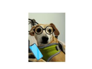 Assistant-Chance