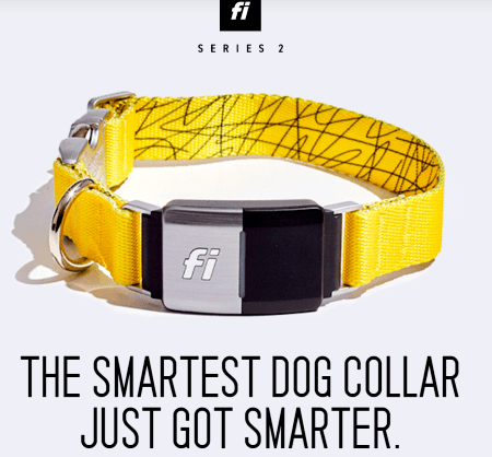 Fi-yellow-smartest-dog-collar