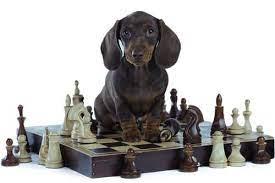 dog-playing-chess