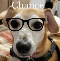 Love A Rescue Dog