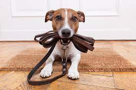 dog-with-leash-in-mouth