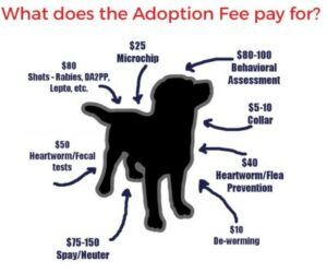 adoption-fees-pay-for