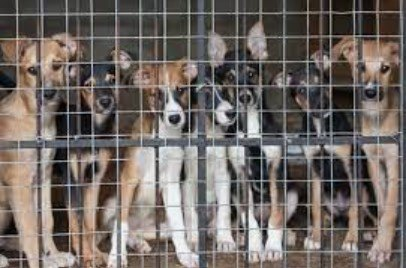 rescue-dogs-behind-gate
