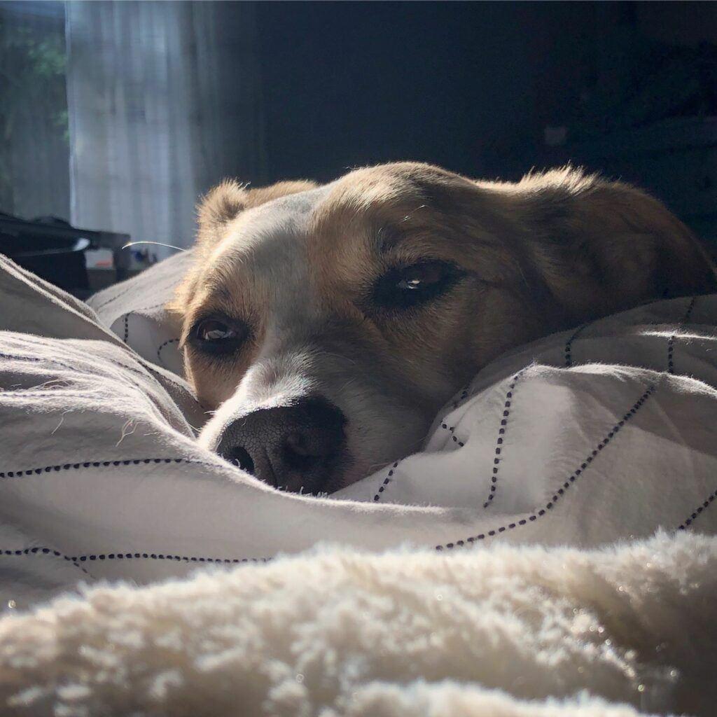 Dog-sleeping-on-bed