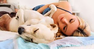 dog-sleeping-on-back-in-bed-with-woman