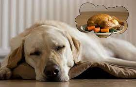 dog-dreaming-about-food