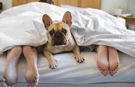 dog-under-blankets-human-feet-showing