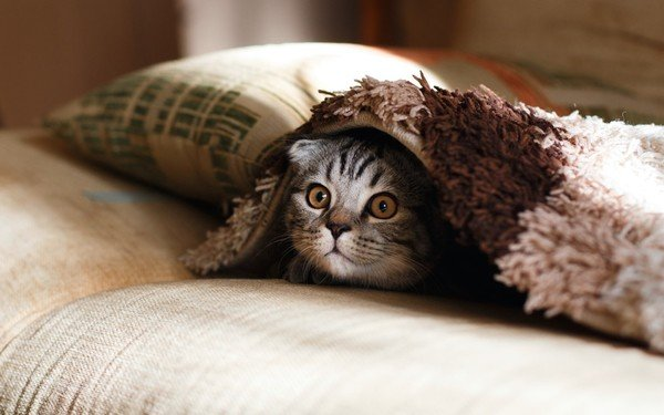 cat hiding under blanket on couch