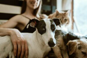 dogs and cat snuggling with woman