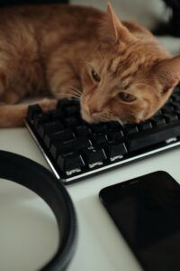 Cat laying on a keyboard