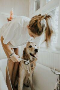 woman giving dog a bath
