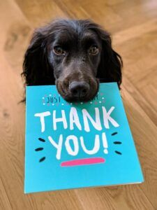 black dog holding thank you card in mouth