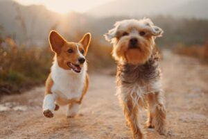 two dogs running on a dirt road