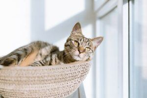cat laying in basket by window
